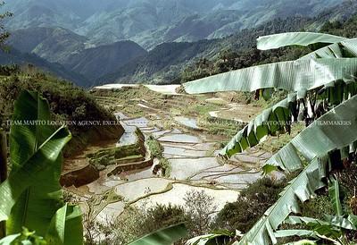 MAPITO Paddy field locations worldwide