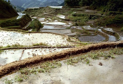 Paddy fields powered by MAPITO Locations