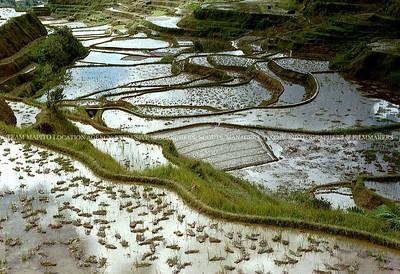 MAPITO paddy fields
