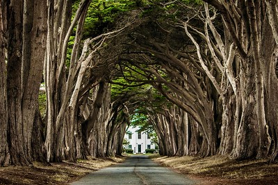 cypress_tunnel - 1