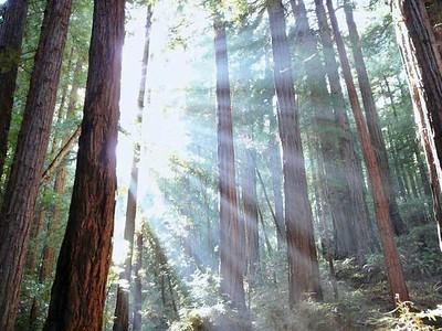 muir_woods - 3