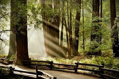 muir_woods - 2