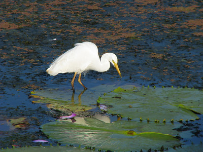 EGRET INTERMEDIATE_22