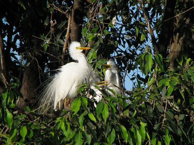 EGRET INTERMEDIATE_45