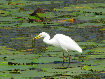 EGRET INTERMEDIATE_16