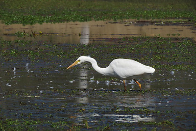 EGRET INTERMEDIATE_73