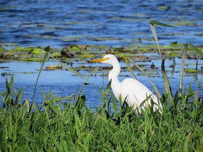 EGRET INTERMEDIATE_76