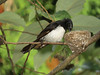 WAGTAIL WILLY_41