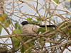 WAGTAIL WILLY_02