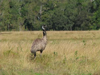 EMU F_03