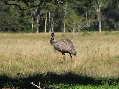 EMU F_02