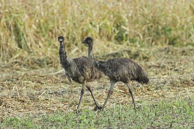 EMU J_02