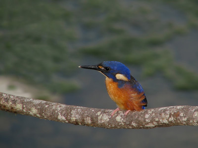 KINGFISHER AZURE_04