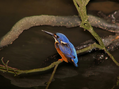 KINGFISHER AZURE_03