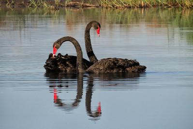 WETLAND BIRDS LARGER