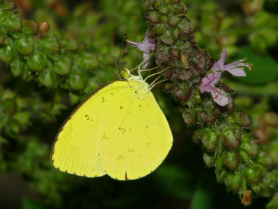 Grass Yellow_05