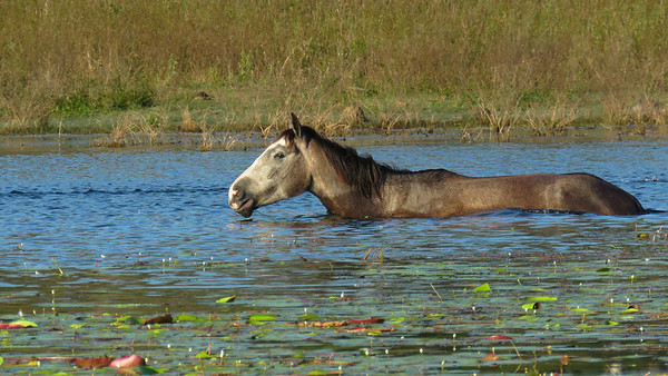 HORSES_01