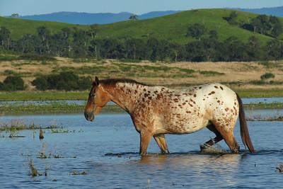 HORSES_02