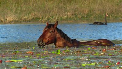 HORSES_04