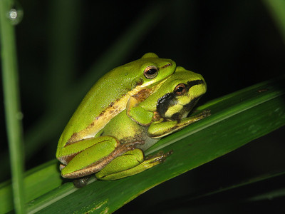 FROGS  !!!_01