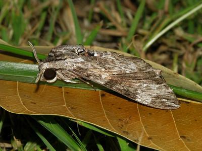 Moth 10_02