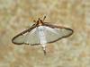 Moth 41_06
