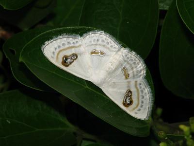Moth 11_01
