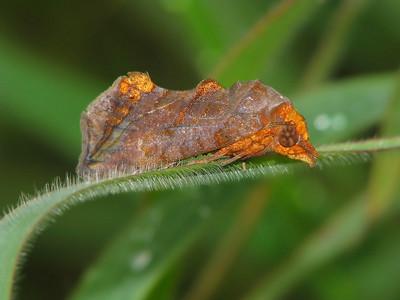 Moth 07_04
