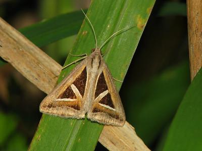 Moth 03_01