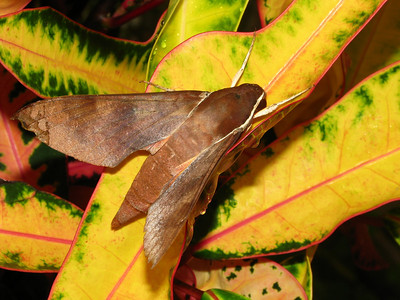 Moth 04_01