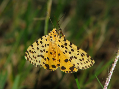Moth 09_04