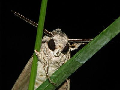 Moth 10_08