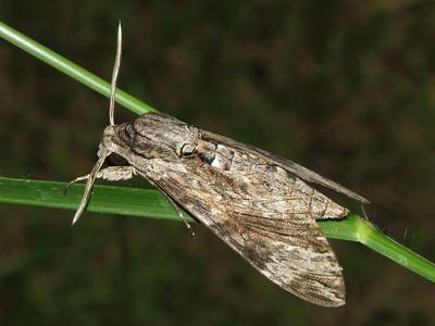 Moth 10_05