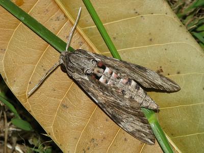 Moth 10_01