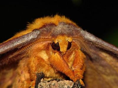 Moth 01_11