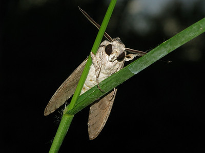 Moth 10_07