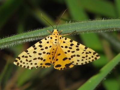 Moth 09_03 (1)