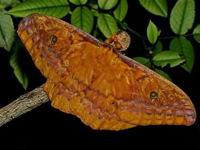 Moth 01_10