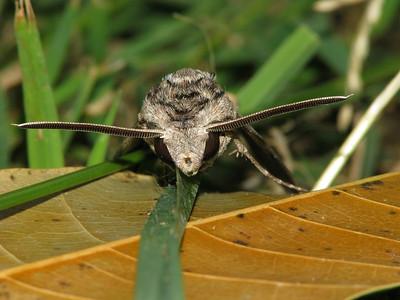 Moth 10_04