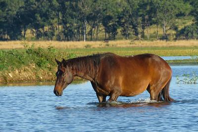 HORSES_03