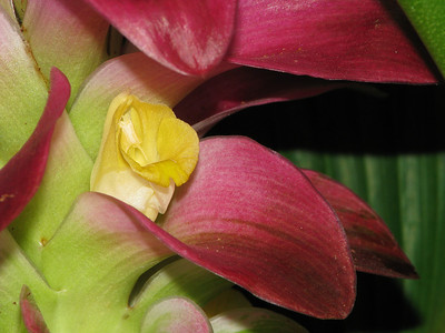 GINGER  FLOWER_04