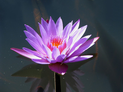 WATERLILLY LP _10