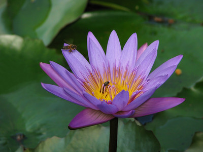 WATERLILLY LP _08