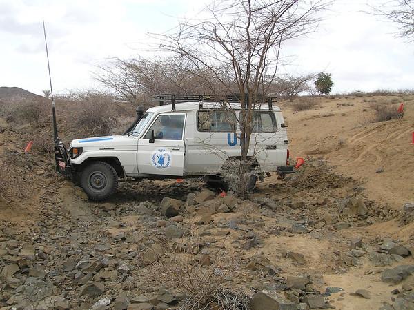 UN & NGO