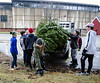 David LaChance — Bennington Banner<br /> Members of the MAU Nordic Ski Team empty a pickup truck bed of collected Christmas trees behind the Career Development Center on Saturday. More than 200 trees were collected during the team's largest annual fundraiser, which aimed to raise $2,000 for equipment and wax.