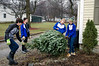 David LaChance — Bennington Banner<br /> Members of the MAU Nordic Ski Team, from left, Chase Dobson, Leo Herbert, Sarah Umphlett and Sam Umphlett, carry away a Christmas tree on Main Street in Bennington during the team's annual tree collection Saturday. More than 200 trees were disposed of during the team's largest annual fundraiser, which aimed to raise $2,000 for equipment and wax.