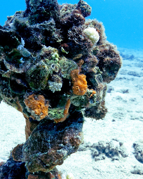 Can you find the frogfish in this photo?