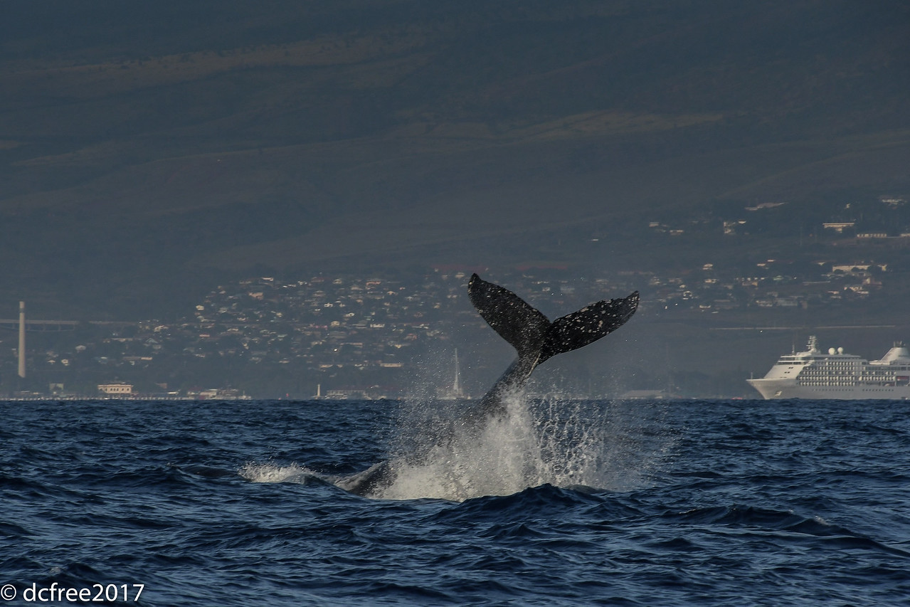 TAIL SHOT HUMPBACK