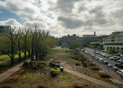 Final look: the English Elm trees that have stood at University Square since 1885. Image 2