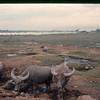 Danang East 1966